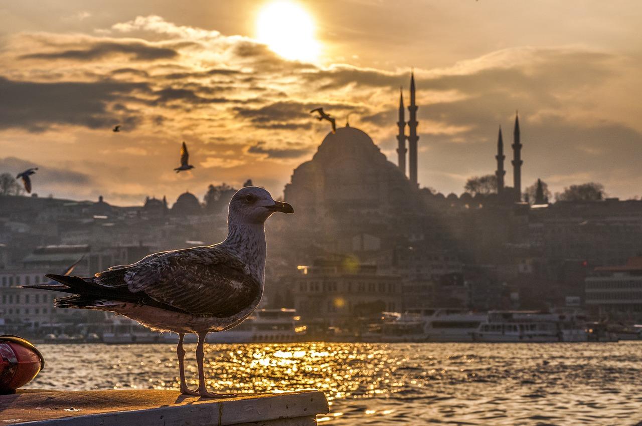 turkey istanbul seagull-2135533_1280